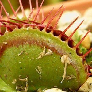 【自由研究】都会に生育する地衣類・コケ・シダ植物を観察しよう