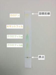 ツツジの葉の色素抽出液に含まれていた4種類の光合成色素