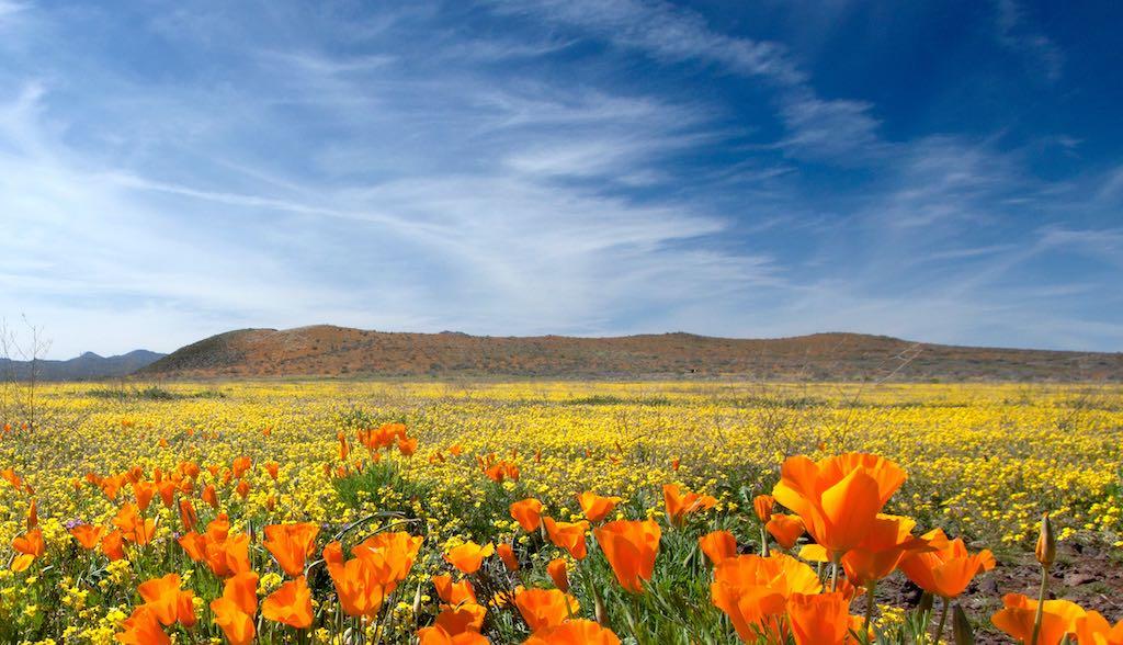 アリゾナ州ペリドット・メサの風景